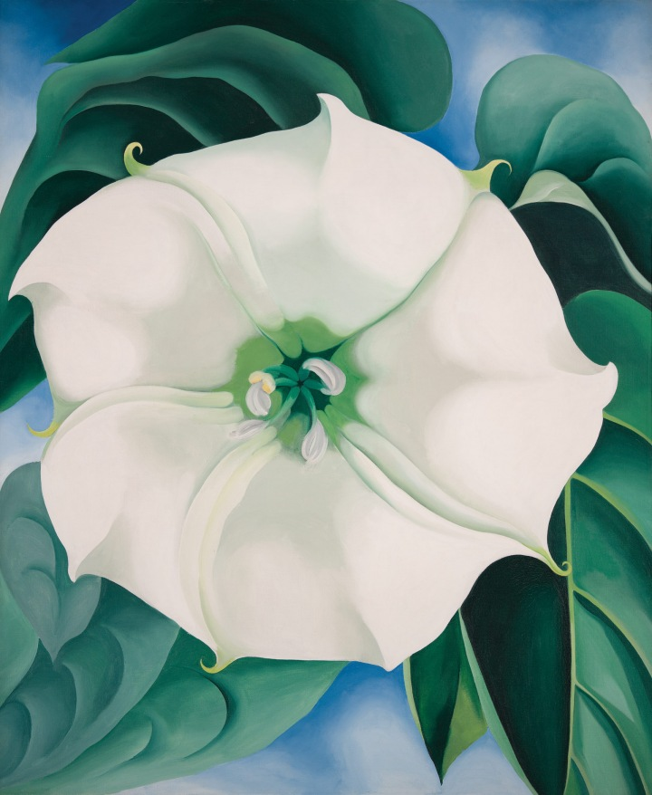 Georgia O Keeffe Flower Paintings